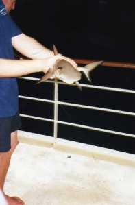 Did I ever tell you about the time I caught a shark?
