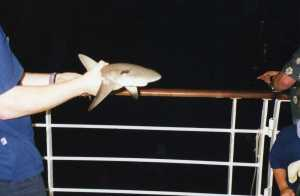 Sharkin'