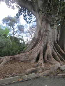 A Big 'Ol Tree