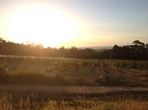 Gisspsland Wine Company Sunset