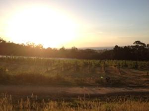 Gisspsland Wine Company Sunset