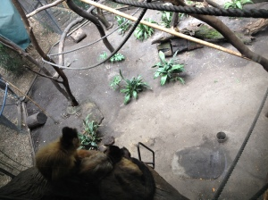 Melbourne Zoo Monkeys