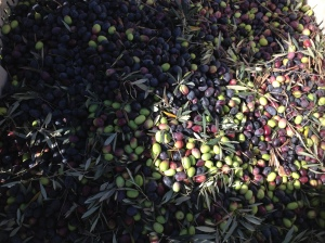 400g Of Olives