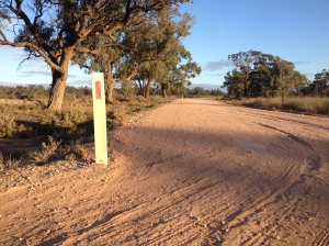A Dirt Road In Hazeldell