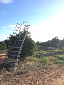 Picking Ladders