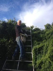 Garry Picking Oranges