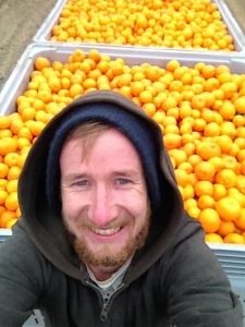 Chris With Fulls Bins Of Mandarins