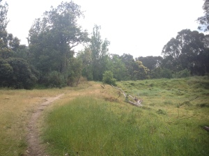 A Meadow In Yarra Bend Park