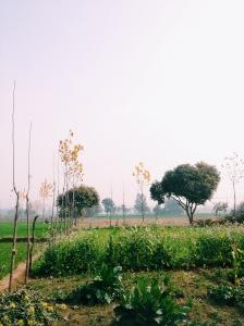 Sisana Fields
