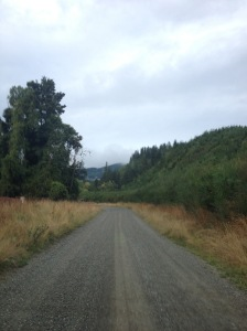 A Backroad in Rural New Zealand