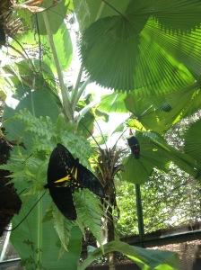 Butterfly Kingdom