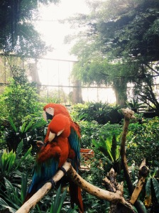 Macaws at the Butterfly Kingdom
