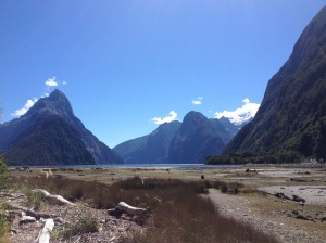 Milford Sound At Low Tide