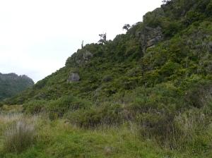 Limestone Ridges In The Rainforest