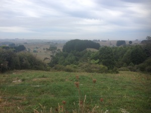 Matamata Farmland