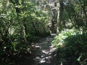 The Green Canopy of the Tongariro Crossing