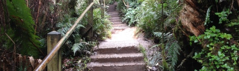 The Kokoda Memorial Trail.