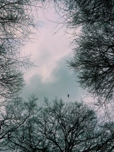 A Kite In the Trees