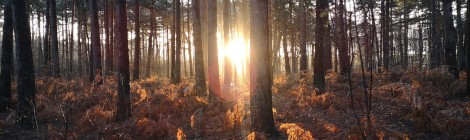 Sunrise Through The Woods