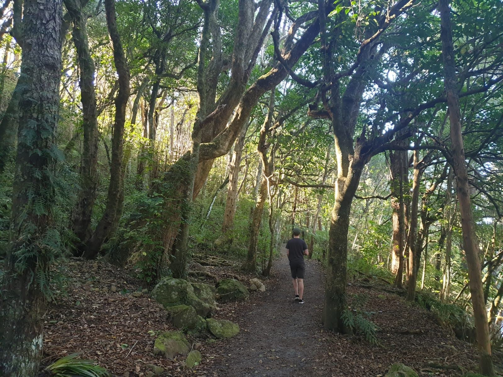 Chris Walking the Kerikeri River Track