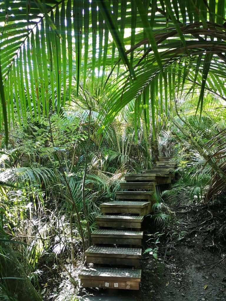 Nikau Reserve