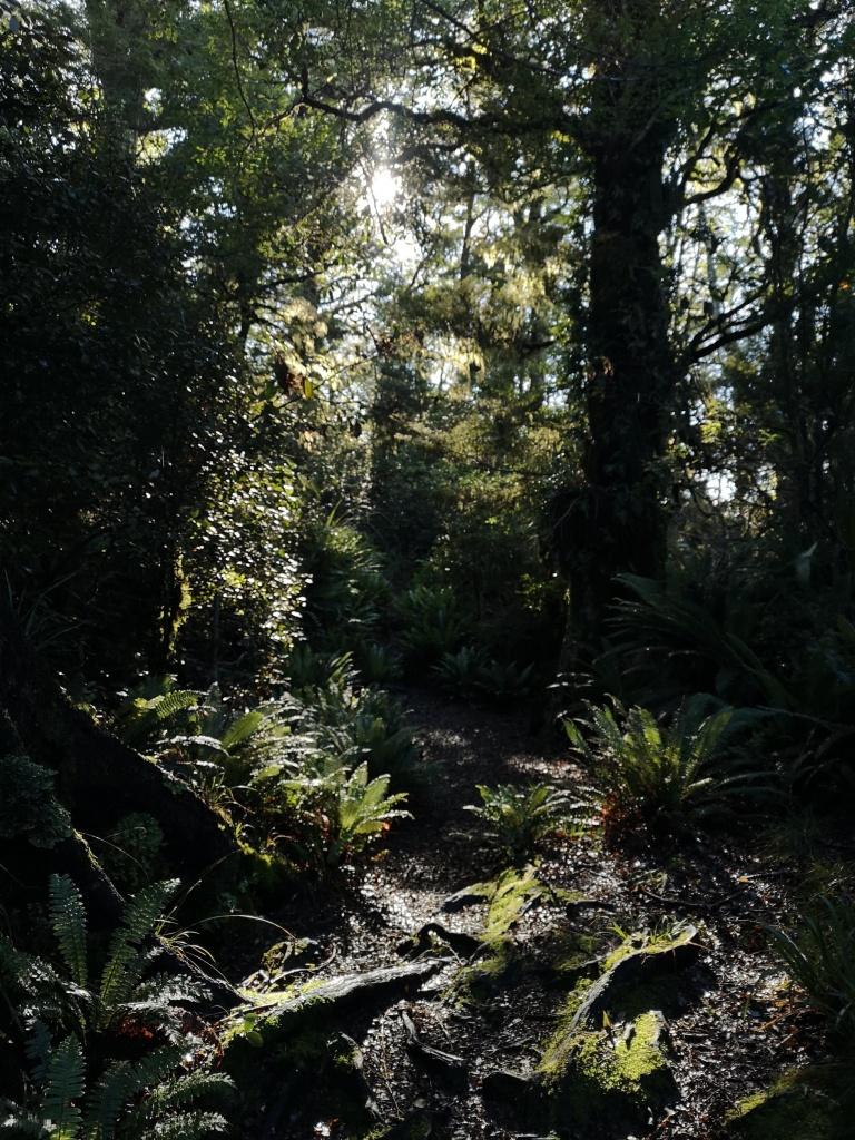 Te Urewera Rainforest