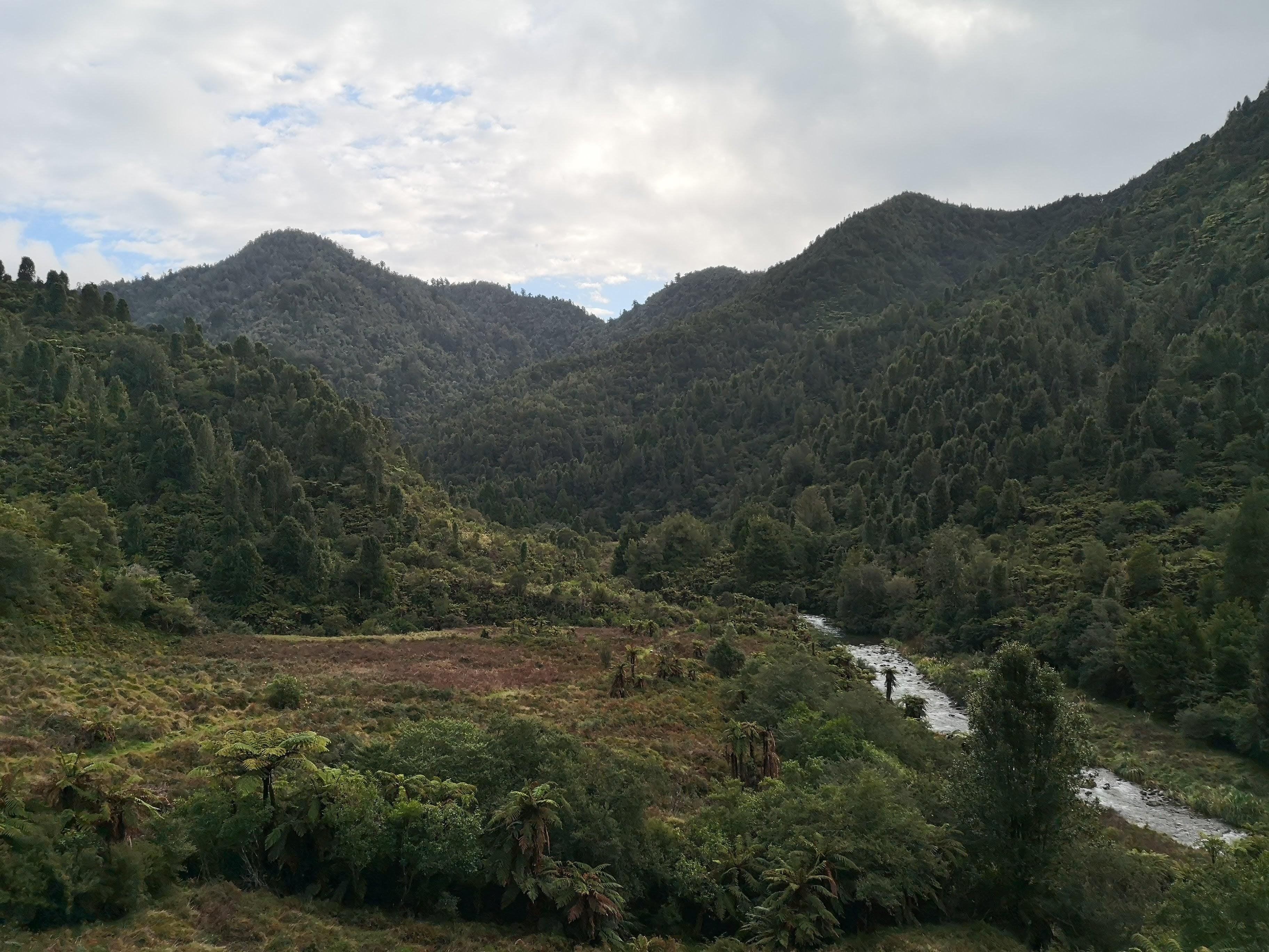Waioeka Gorge