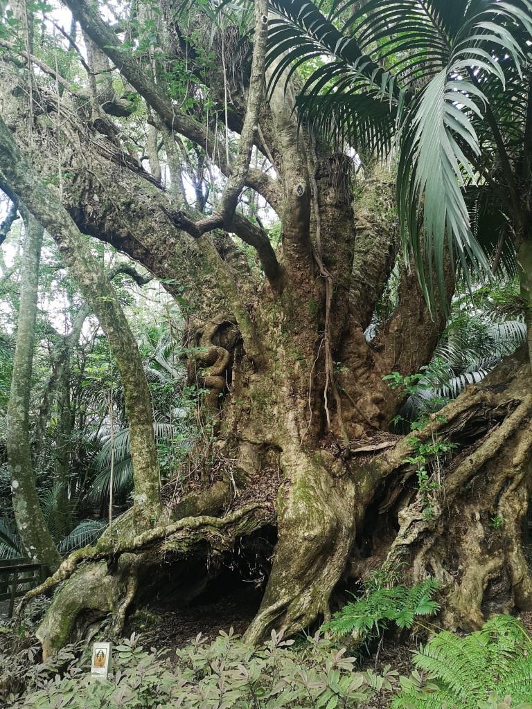 Taketakerau in Hukutaia Domain