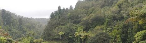 Tangarakau Gorge